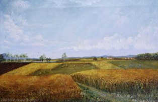 Ampia veduta di campi di frumento