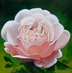 Tenda da campeggio posata sul petalo di una rosa